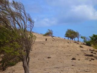 Hills above Chatham Bay