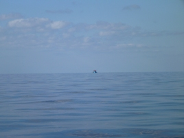 Glassy seas and a fishing boat